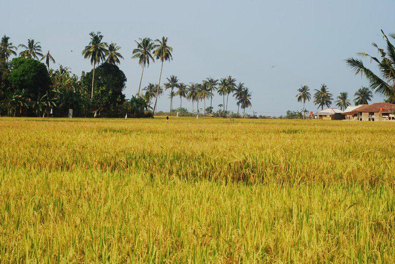 Hari 2 : Sawarna ( Laguna pari, Pantai Goa Langir )