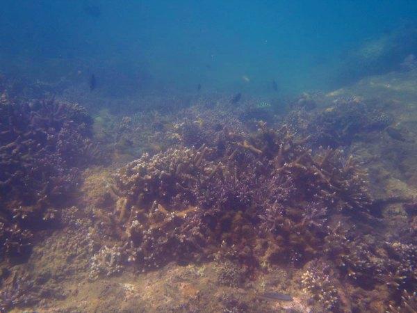 View Snorkeling di sekitar Pulau Peucang