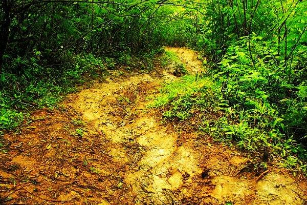 Jalur Trekking Licin ke Curug Malela