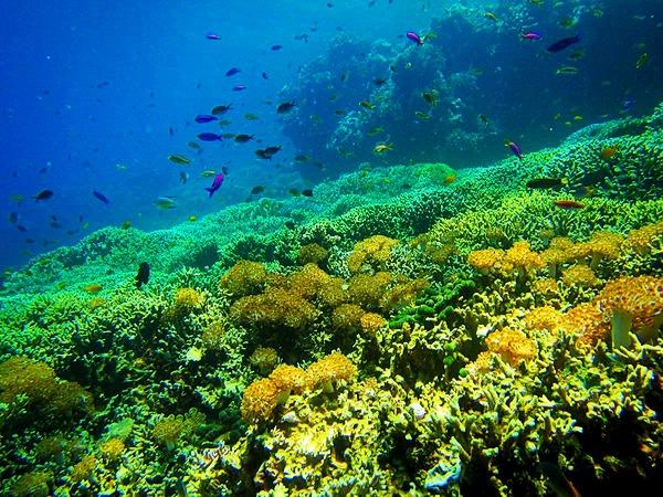 Pulau Menjangan – Spot Snorkeling dan Diving Eksotis di Bali Barat