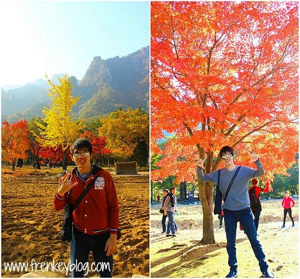 Daun Warna Warni ketika Musim Gugur di Seoraksan National Park
