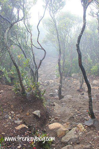 Jalur Trekking menuju Puncak Gunung Gede jalur Putri
