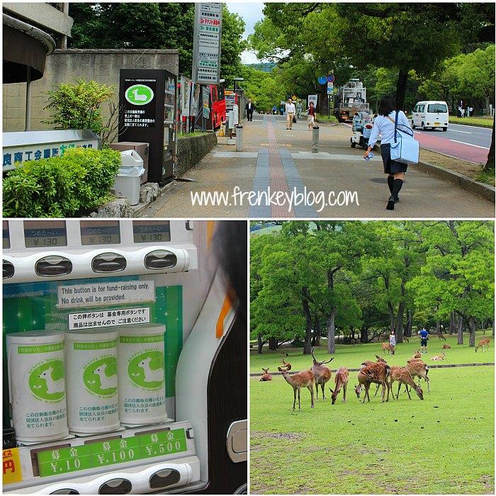 Suasana Hijau di Jalanan Kota Nara, Kaleng Rusa buat Amal, Rusa Liar di Taman Terbuka di Kota Nara