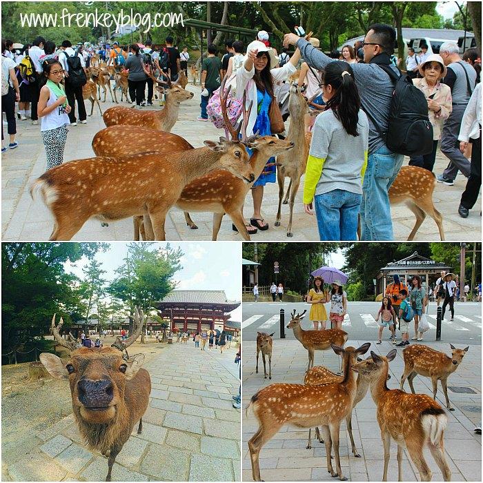 Kumpulan Rusa lagi berebut makanan di halaman Todaiji Temple - Nara