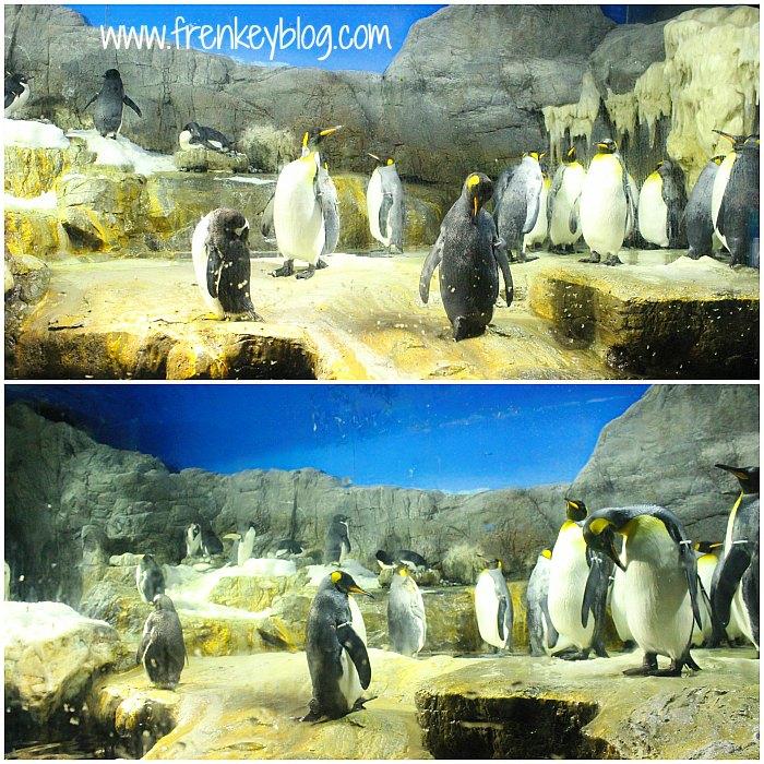 Penguin Lucu ~ Osaka Aquarium Kaiyukan