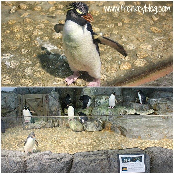 Penguin ( Hot Blood ) ~ Osaka Aquarium Kaiyukan