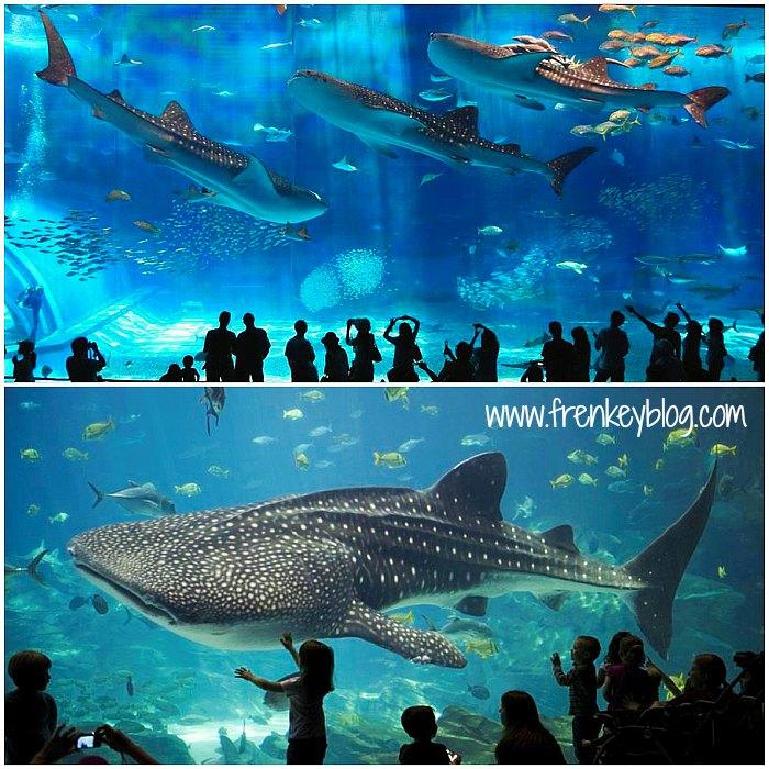 Hari 7 : Osaka Castle, Osaka Aquarium Kaiyukan, Shinsaibashi