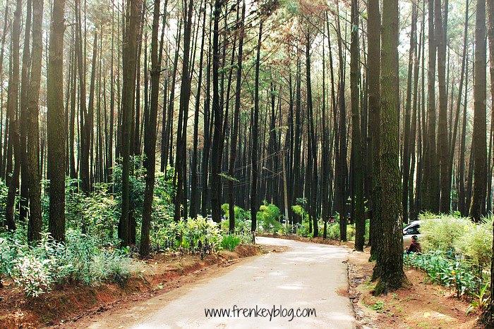 Hutan Pinus Gunung Pancar – Tempat Piknik Santai di Bogor