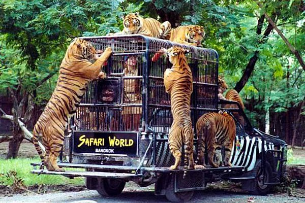 Safari World - See Tiger inside a cage