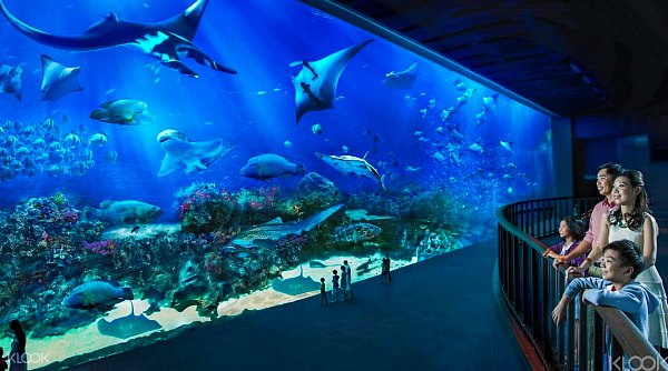 Tiket Murah SEA Aquarium