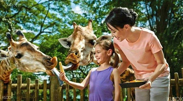 Tiket Murah Singapore Zoo