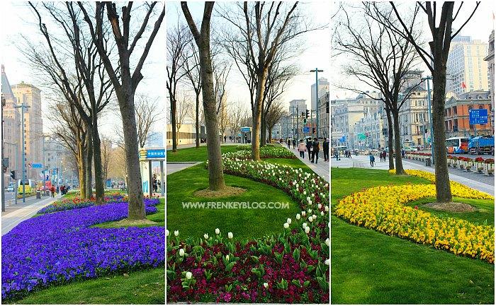Bunga-Bunga Cantik di The Bund - Shanghai