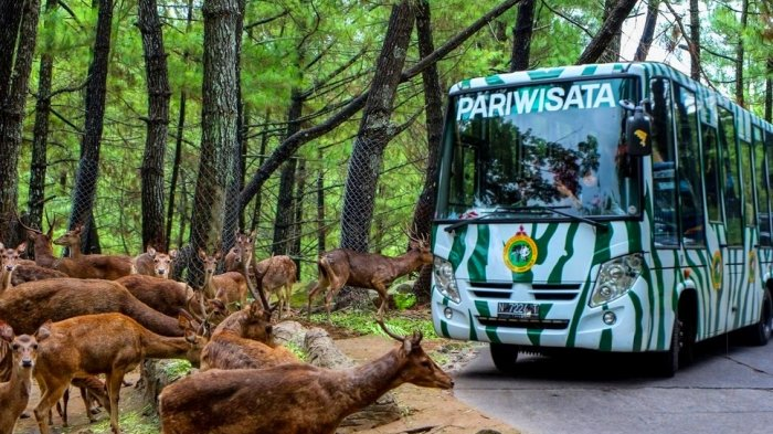 Taman Safari Puncak Bogor ( Photo : Travel Tribunnews )